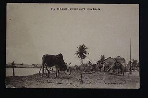 Tarjeta-Postal-Antigua-Animada-st-Louis-Du-Senegal-Un-Esquina-Avenida-Ddoods
