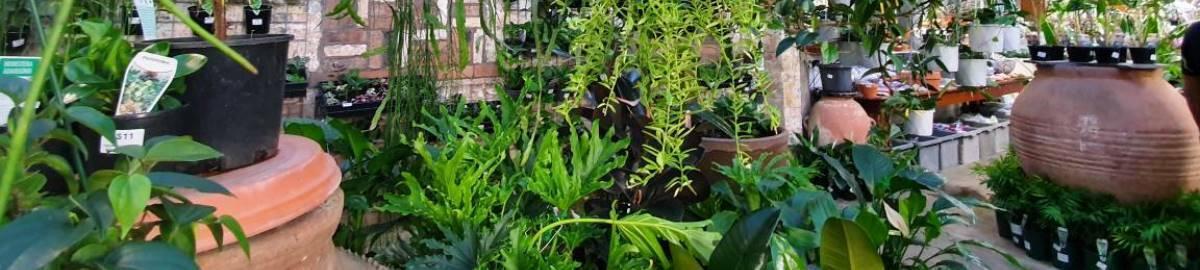 indoorplantssydney