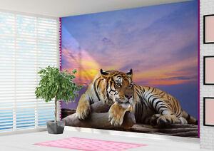 Papier-peint-Tigre-refrigeration-a-crepuscule-nature-faune-photo-murale