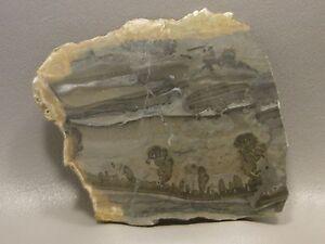 Cotham-Marble-Stromatolite-Polished-Stone-Slab-3-inch-Fossil-England-4