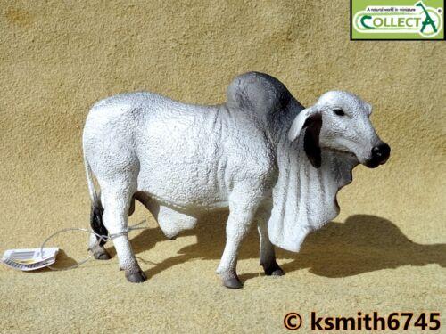 Collecta Brahman TORO solido in plastica giocattolo fattoria animale da compagnia Wild Zoo NUOVO