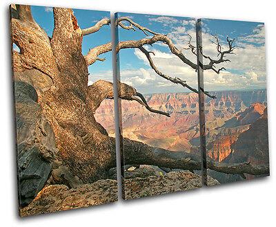 Grand Canyon Tree Landscapes TREBLE CANVAS WALL ART Picture Print VA