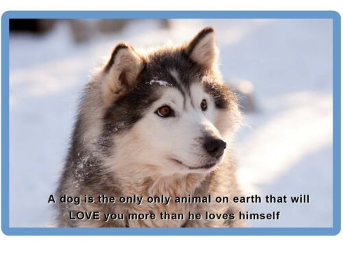 Siberian Husky Dog  Refrigerator Tool  Box  Magnet Gift Card Insert #3