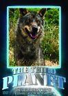 Third Planet The Last Iberian Wolves 0814618015734 DVD Region 2
