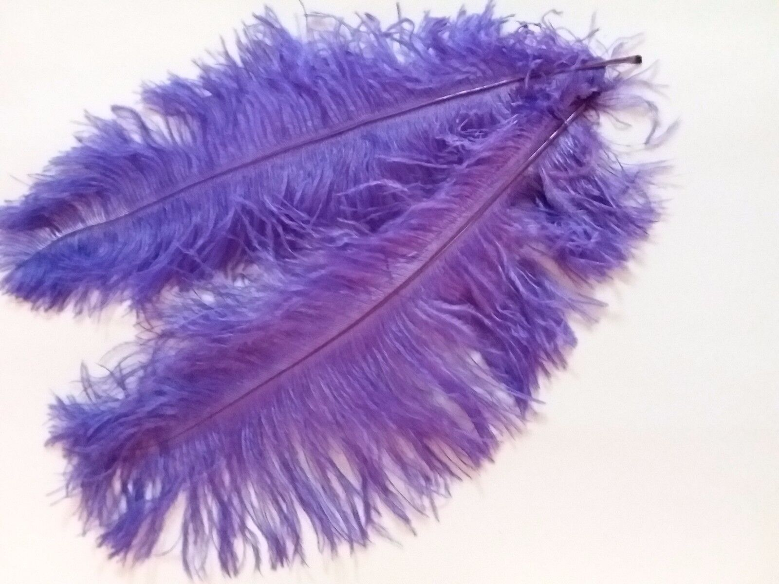 One hundrouge(100) violet ostrich blondene feather 1st grade 350-400MM (14-16 )