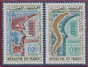 Livraison Rapide 1962 Maroc N°448/449** Aquararium Casablanca, Poisson, 1962 Morocco Fish Set Mnh Soulager La Chaleur Et Le Soleil