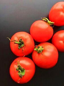 TOMATO-039-Tatura-Dwarf-039-25-seeds-bush-plant-vegetable-garden-AUSTRALIAN-HEIRLOOM