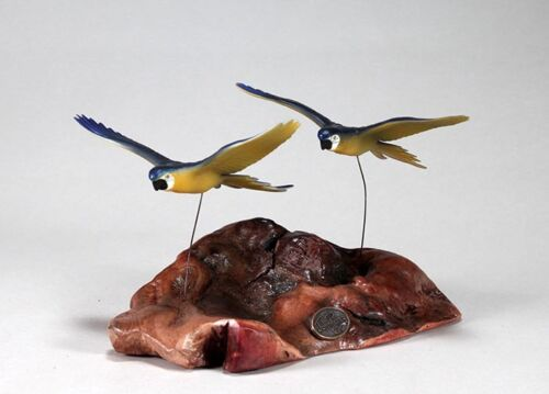 MACAWS PARROT PAIR Sculpture New Direct from JOHN PERRY BLUE YELLOW 7in long