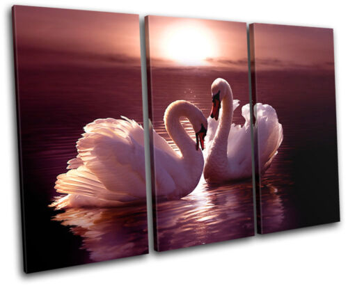 Swans Animals Lake Nature Love Romance Canvas Artwork Picture Print Wall Photo