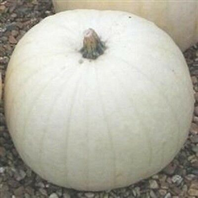 Pumpkin Snowman -10 seeds -  Vegetable