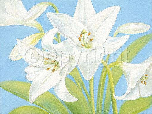 S.ruisseau   Blanc Lily Lys Lis tableau prêt 60x80 mural floraison fleurs