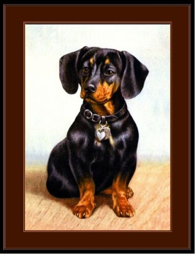 Vintage English Print Dachshund Doxie Dog Puppy Dogs Puppies Art Picture Poster