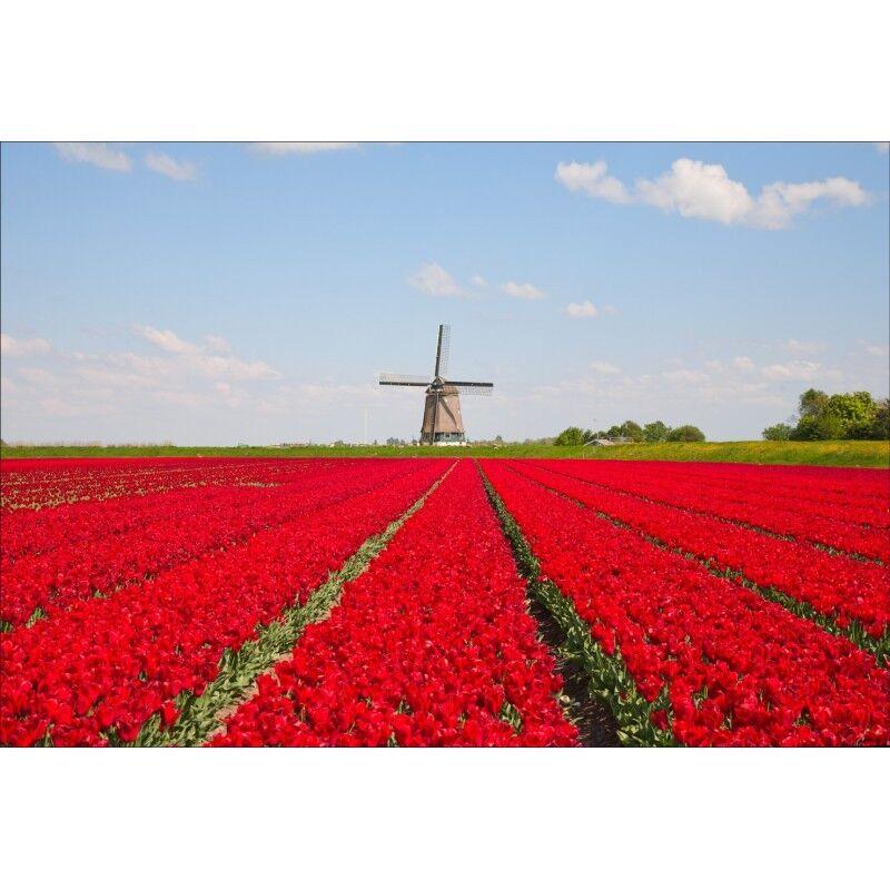 Papier peint géant champs de fleurs rouge1445 rouge1445 rouge1445 | Doux Et Léger  | La Mise à Jour De Style  | Qualité Et Quantité Assurée  3d693e