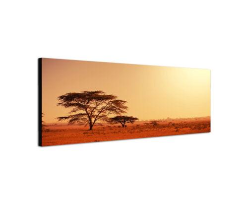 120x40cm Wandbild Leinwand Panorama Köcherbaum Namibia Afrika Zitter Sinus Art