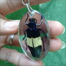 Wing KeyChain Beetle Bug Taxidermy Insect Stick Display Real Clear Resin Keyring
