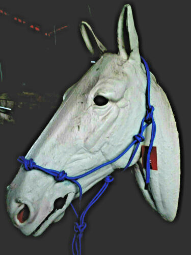 Royal Bleu 4 nœud Natural Horsemanship main attachée Rope Halter Bitless Bridle