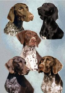 German-Shorthaired-Pointer-Blank-Card-No-1-By-Starprint