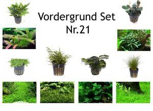 Au Premier Plan Set Avec 6 Tropica Pot De Plantes Aquariumpflanzenset Nr.21