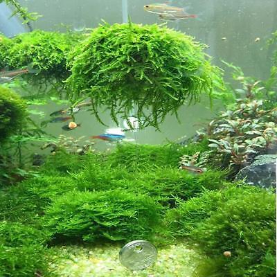 Diy Aquarium Fish Tank Media Moss Ball Filter Decor Live Plant Aquatic Decor Mp Ebay