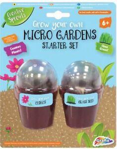 Chee Gras & Cosmos Blume Plants Mikro Gärten Kinder Kreativ Grow Your Own