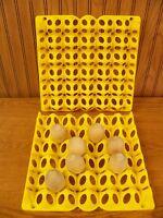 6 Chicken Egg Trays For Incubator (tr30)