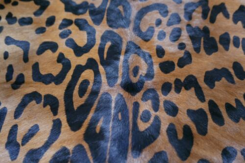"""Around 35/"""" X 30/"""" Jaguar Print Mini Cowhide Jaguar Print Calf Skin Size"""