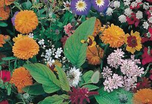 Mischung-Aus-Blumen-Campestres-1-000-Saatgut-Seeds-Vielfaeltig-Pflanzen