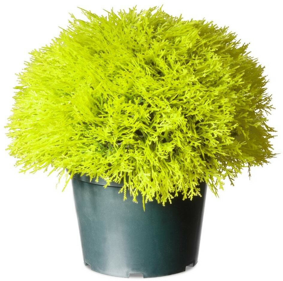 15 in. Juniper Bush Plants Decorative Indoor Outdoor w  Grün Pot, Golden Gelb