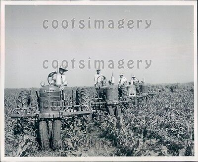 1953 Farmers on Matching Vintage Tractors in Corn Field Press Photo