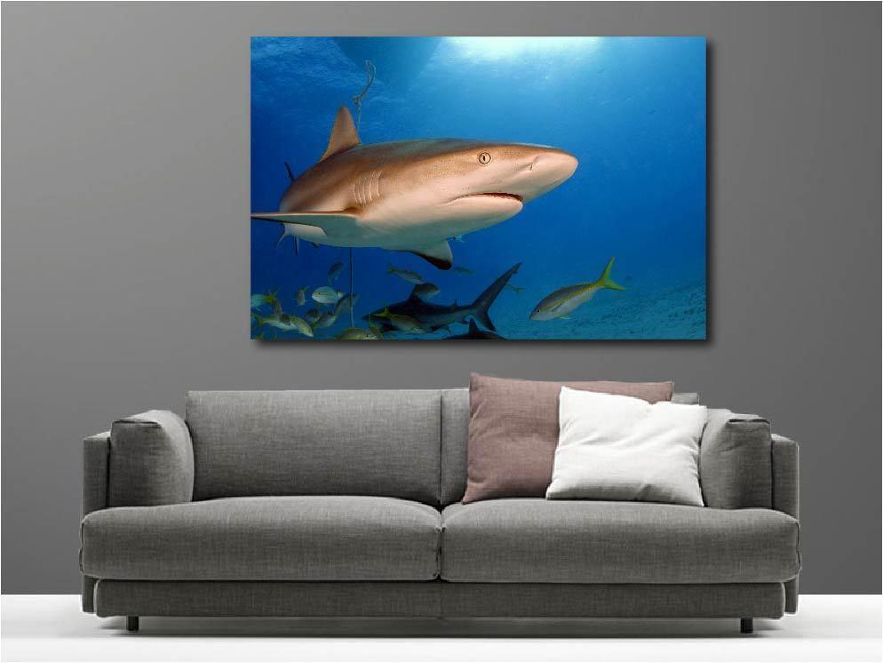 Cuadro pinturas decoración decoración pinturas en kit Tiburón ref 43749016 dbc575