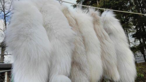 Coda di volpe Coda di Volpe Coda Volpe Coda Volpe stadia volpe polare rimorchio