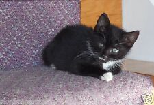 SPONSOR MARCO A RESCUED FREYAS FERAL CAT RESCUE DONATION Rec email COLOR PHOTO