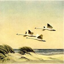 Wildschwäne über der Düne * K.E. Olszewski 1936 * Jagdliche Grafik * Kunstdruck