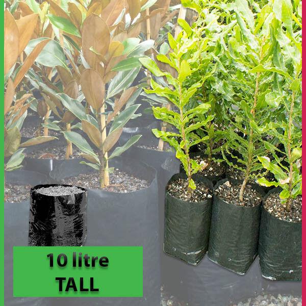 10 lt TALL Plant Bags - Pack of 100 - Black Polyethylene planter Growbags