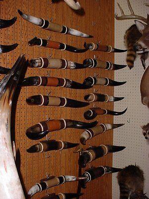 Bull Horns Mounted 1' - 2'  STEER HORNS COW HORNS TAXIDERMY