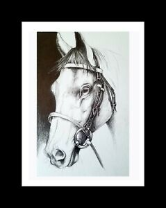 Free shipping and non-cash on delivery Horse Stallion Original A5 ...