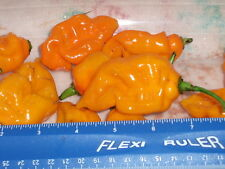 25 Fresh Premium Yellow Trinidad Scorpion Cardi Pepper Seeds From our Garden