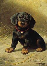 DACHSHUND SMOOTH COAT DOG FINE ART PRINT - Daxi - Sausage Dog - Puppy