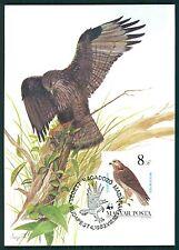 UNGARN MK VÖGEL GREIFVÖGEL BIRD OF PREY BUSSARD BUZZARD MAXIMUM CARD MC CM h1339