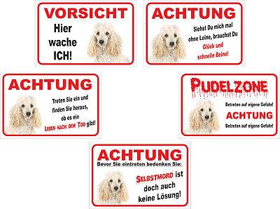 Unterschiedliche Motive 15x20-40x60cm Hund Unterscheidungskraft FüR Seine Traditionellen Eigenschaften Mutig Schild Vorsicht Weißer Pudel