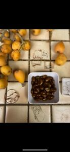 Viable-loquat-fruit-tree-seeds