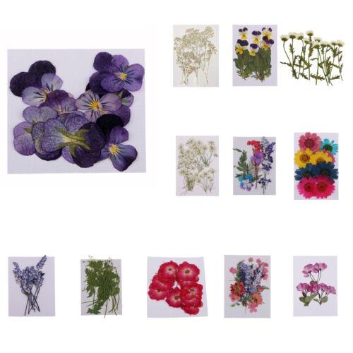 Gepresste Blumen getrockneten Blumen ideal für Home Deko Garden Party