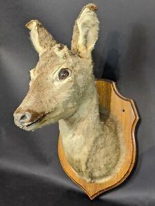 Vintage-Mounted-Deer-Head-Taxidermy