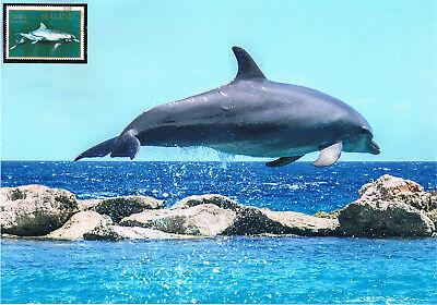 Ausdrucksvoll Delphin Schmuckblatt 8.2