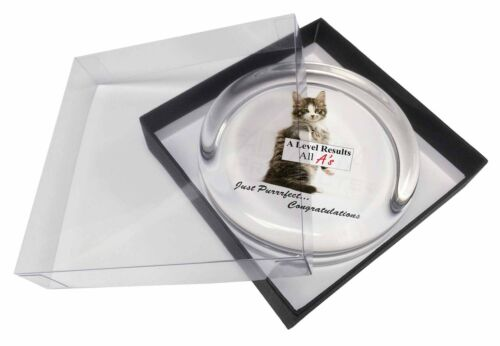 A Level 'Congratulations' Cat Glass Paperweight in Gift Box Christm, AC188AL1PW