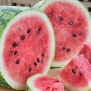 Giant Jubilee Watermelon Seeds | Heirloom & Non-GMO | Fresh Fruit Garden Seeds