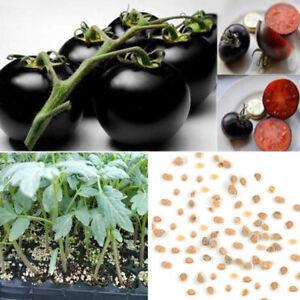 Am-30Pcs-Black-Tomato-Seeds-Garden-Organic-Fruit-Vegetable-Plant-Home-Decor-Sur