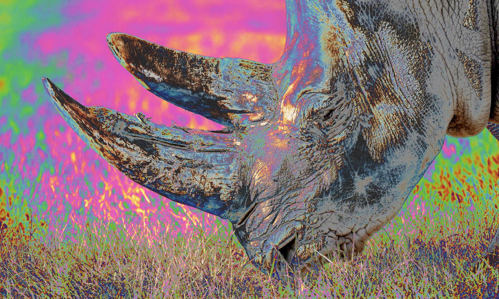 POSTER XXL POP ART ABSTRAKT RHINO NASHORN SAVANNE AFRIKA TIER BIS 150x90