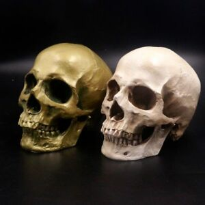 Objective Human Skull Lifesize 1:1 Resin Model Aquarium Fish Tank Halloween Decoration Fashionable And Attractive Packages Pet Supplies