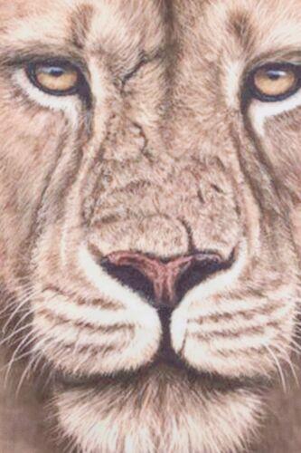 Lion 3D Short Pyjamas Paw Print Pj 7-12 Years